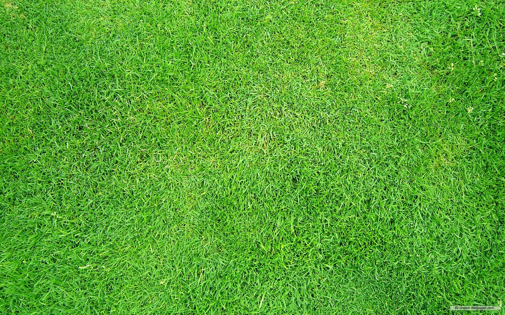 free-grass-wallpaper-1